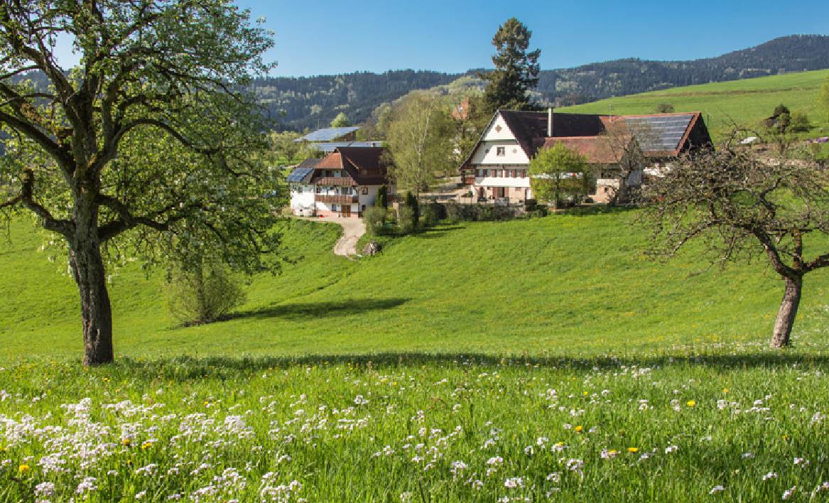 Breigenhof Ferienwohnungen 203